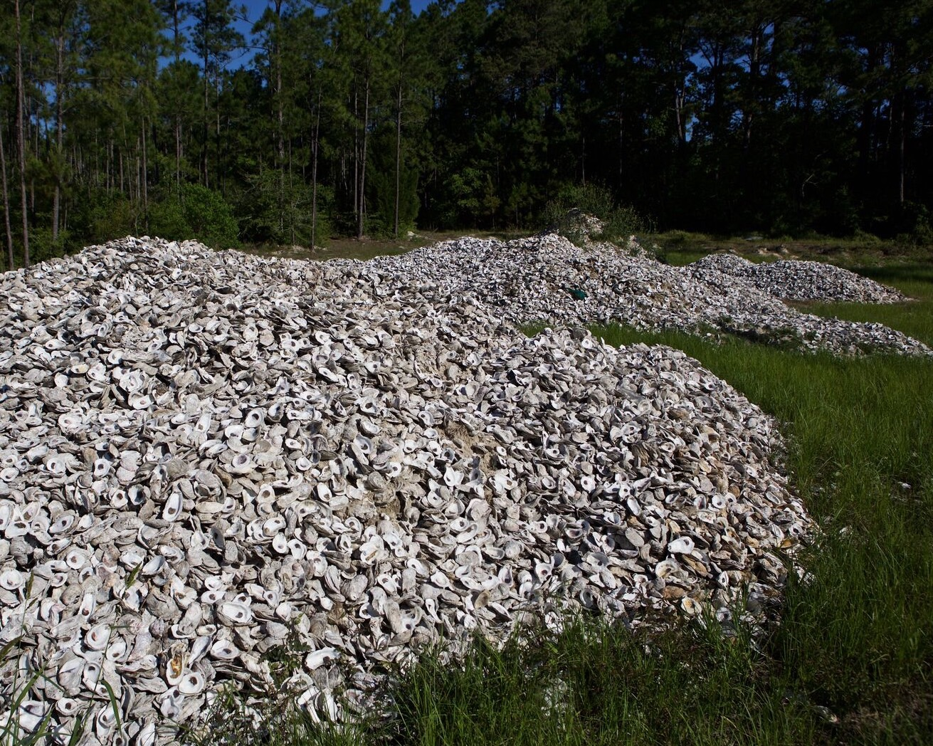 Oyster Shell Recycling Program Helps Restore Gulf Shellfish